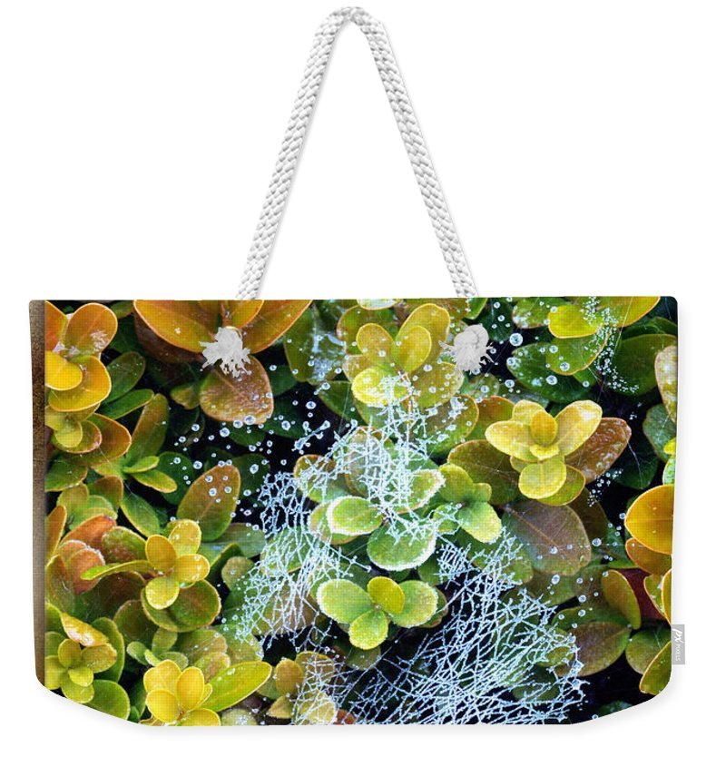 Spider Web Weekender Tote Bag featuring the photograph Awakening by Marc Caryl