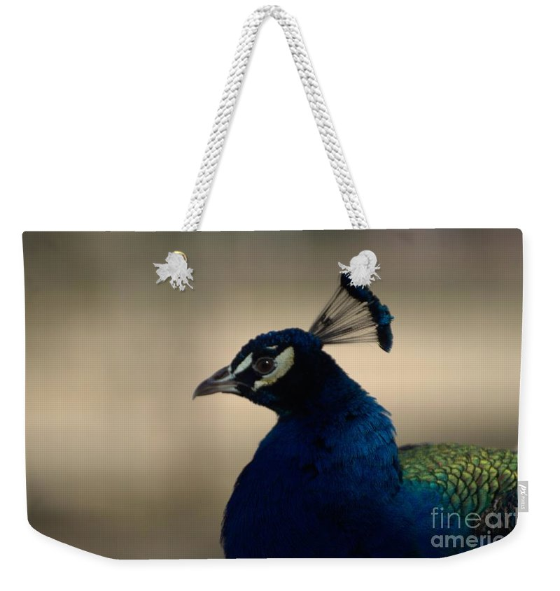 Bird Weekender Tote Bag featuring the photograph Awesome Peacock by Donna Brown