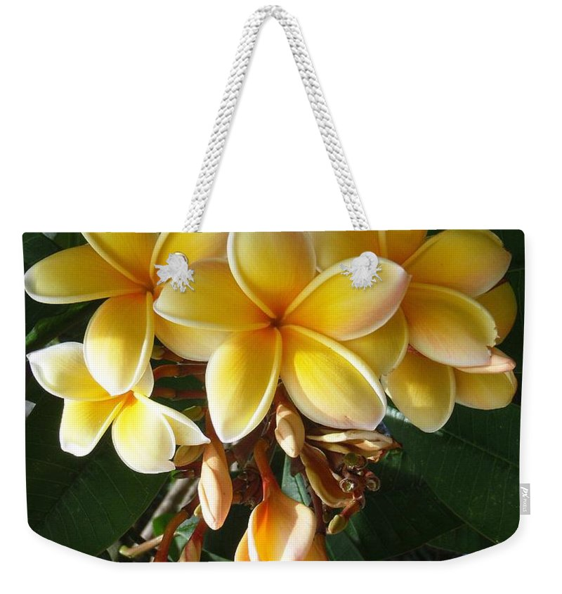 Aztec Gold Weekender Tote Bag featuring the photograph Aztec Gold Plumeria by Mary Deal