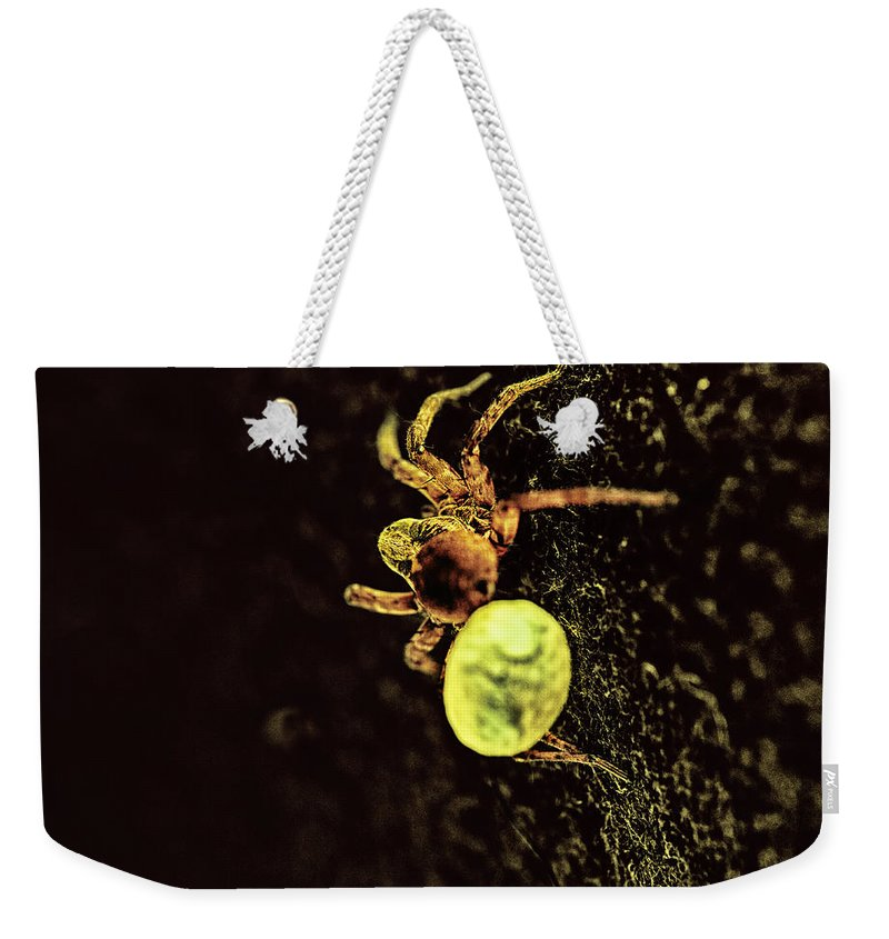 Spider Weekender Tote Bag featuring the photograph Babies Onboard by Susan Capuano