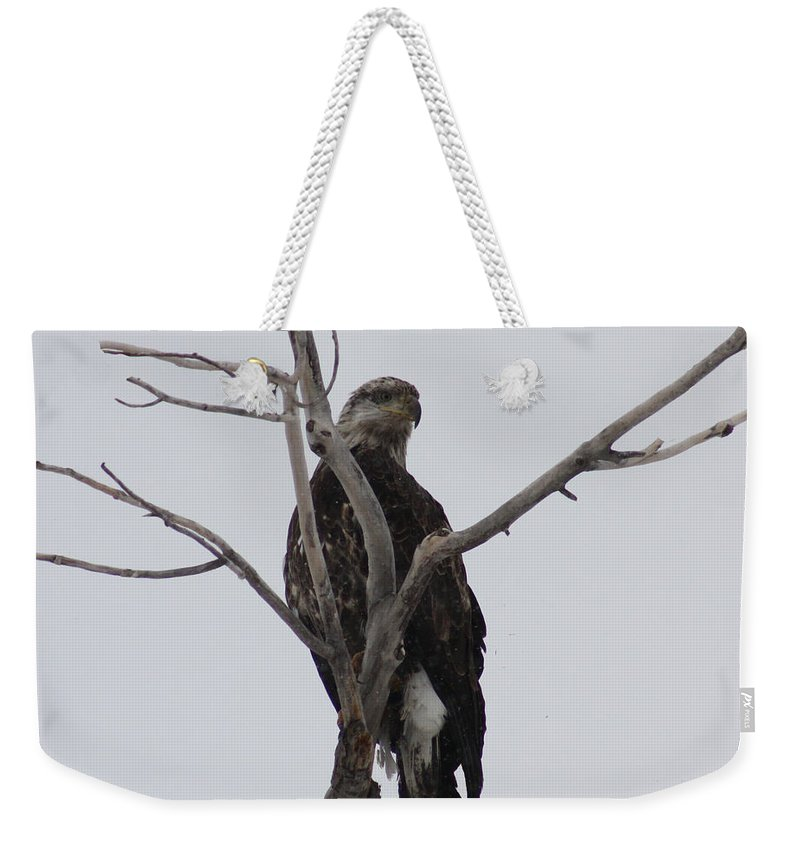 Bald Eagle Weekender Tote Bag featuring the photograph Baby Bald Eagle by Brandi Maher