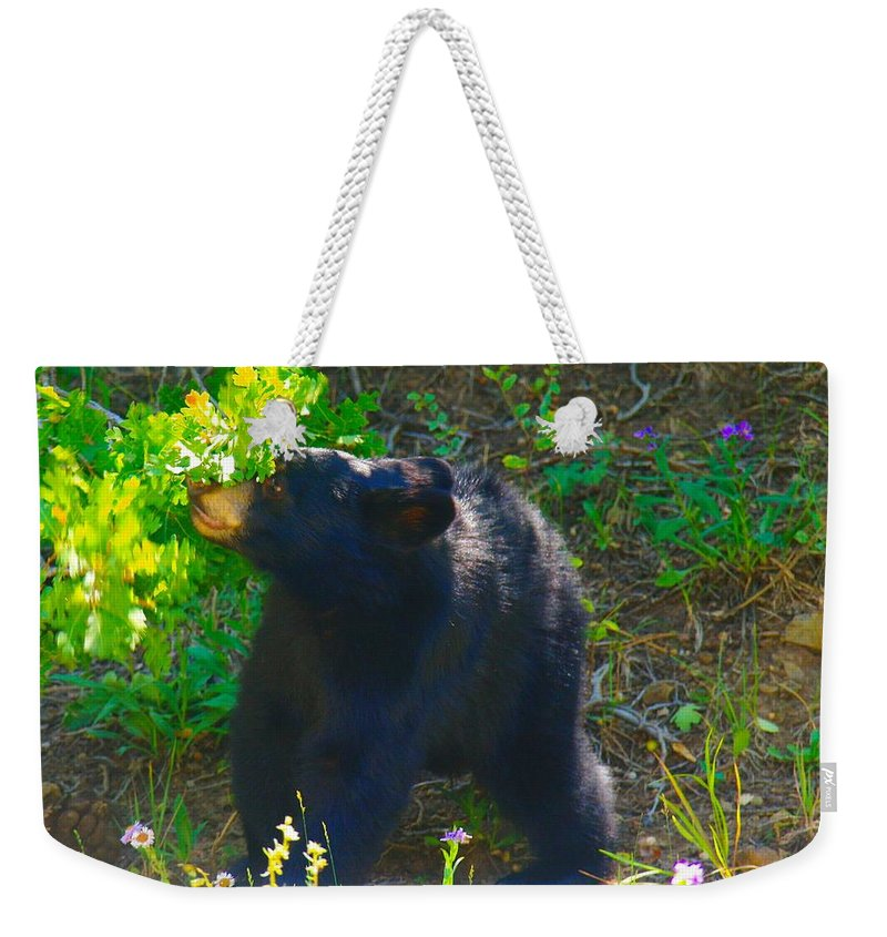 Bears Weekender Tote Bag featuring the photograph Baby Bear Cub by Jeff Swan