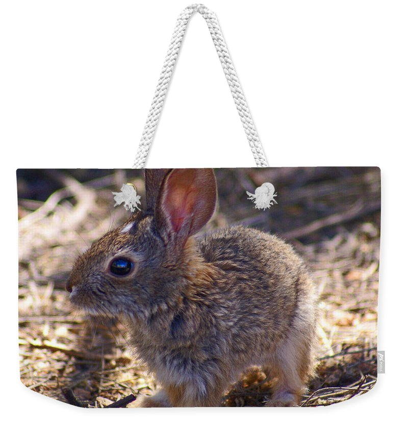 Weekender Tote Bag featuring the photograph Baby Bunny by Heather Coen