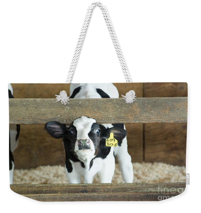 Cow Weekender Tote Bag featuring the photograph Baby Cow by Louise Magno