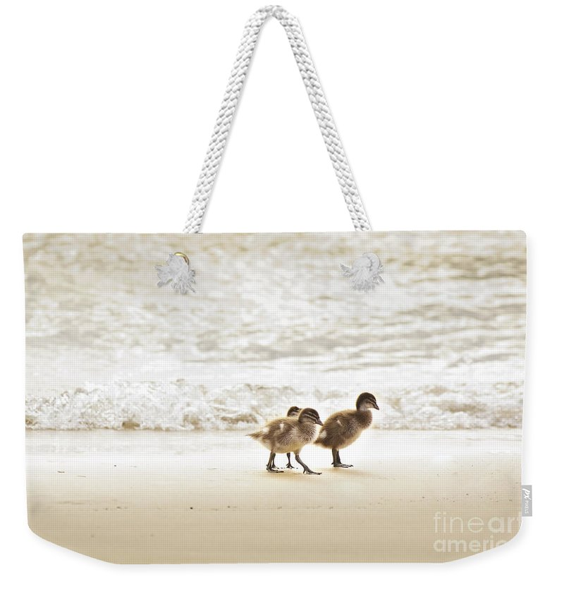 Ducklings Weekender Tote Bag featuring the photograph Baby Ducklings by Tim Hester