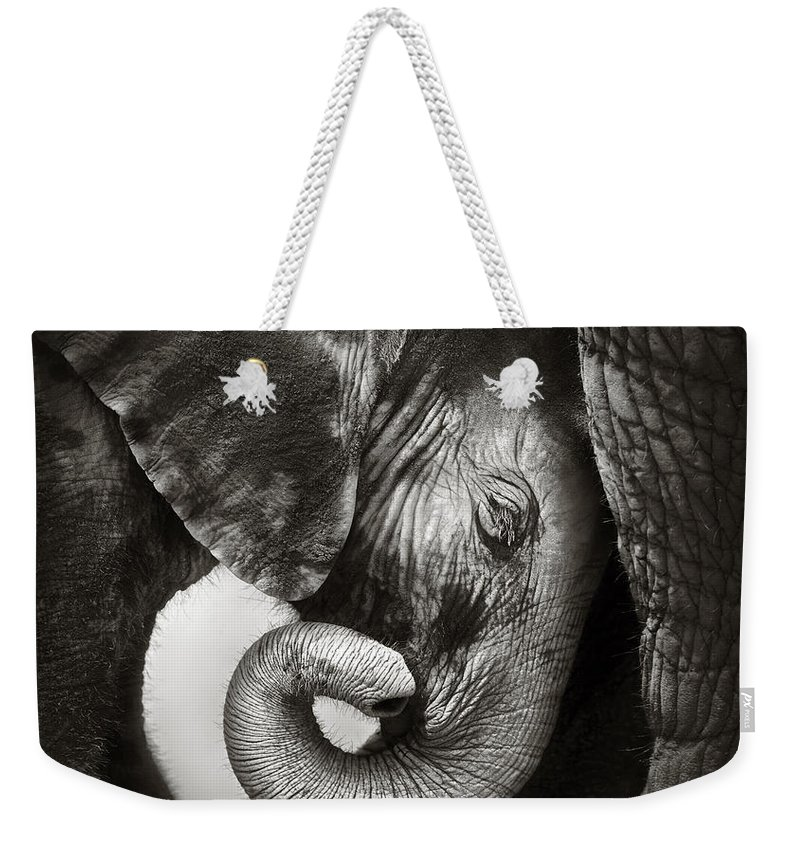 Elephant Weekender Tote Bag featuring the photograph Baby elephant seeking comfort by Johan Swanepoel