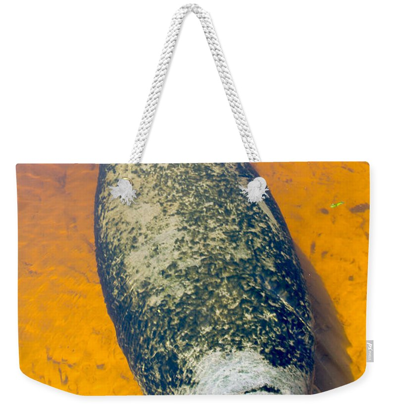 Manatee Weekender Tote Bag featuring the photograph Baby Manatee by Carey Chen