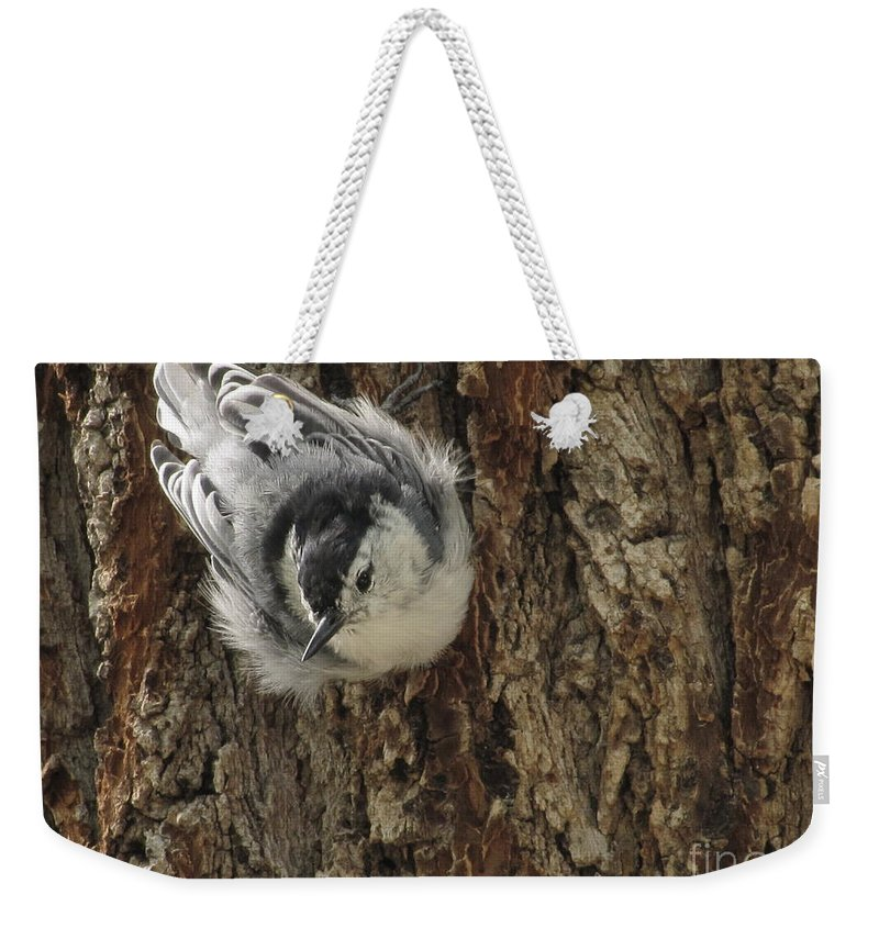 White Breasted Nuthatch Weekender Tote Bag featuring the photograph Baby Nuthatch by Marilyn Smith