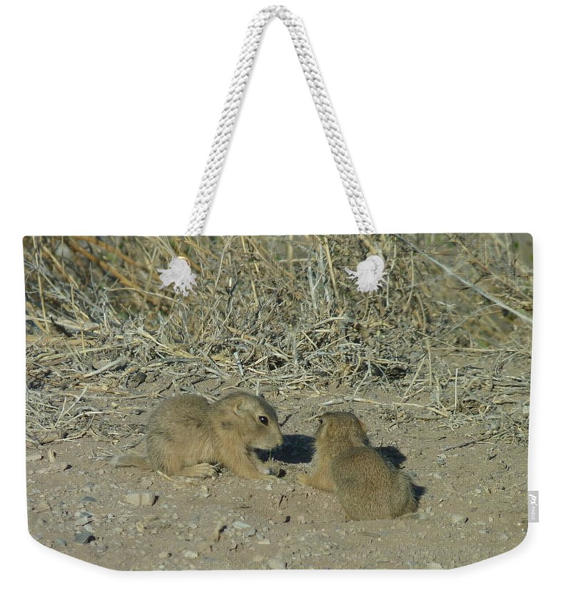 Weekender Tote Bag featuring the photograph Baby Prairie Dog by Katerina Naumenko