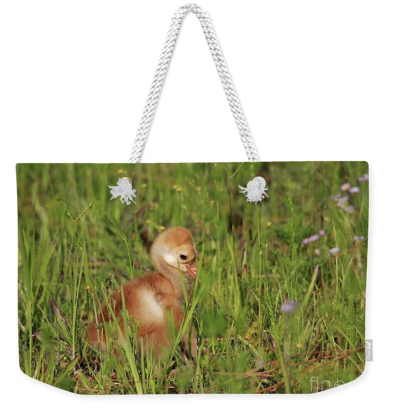 Sandhill Chick Weekender Tote Bag featuring the photograph Baby Sandhill Crane Chick by Deborah Benoit