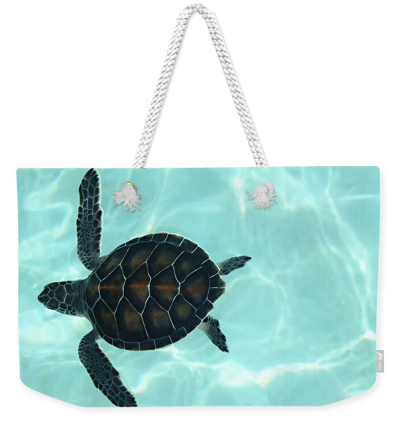 Baby Sea Turtle Weekender Tote Bag featuring the photograph Baby Sea Turtle by Ellen Henneke