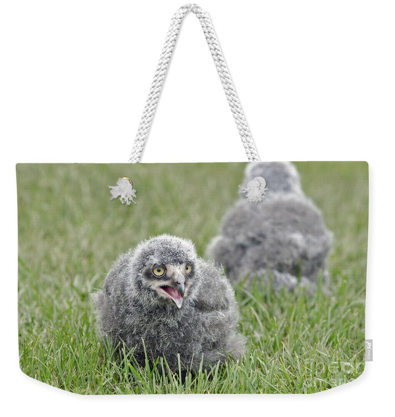 Snowy Owls Weekender Tote Bag featuring the photograph Baby Snowy Owls by JT Lewis