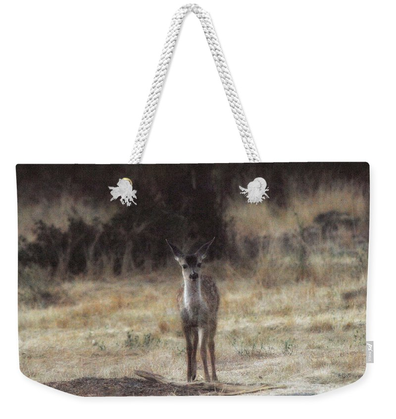 Fawn Weekender Tote Bag featuring the photograph Baby Soft by Donna Blackhall