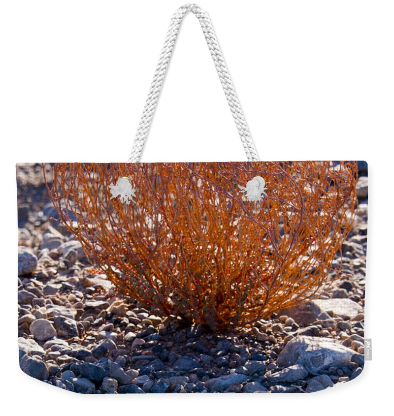 Death Valley National Park California Parks Plant Life Plants Pebble Pebbles Desert Desertscape Desertscapes Stone Stones Weekender Tote Bag featuring the photograph Backlit Color by Bob Phillips