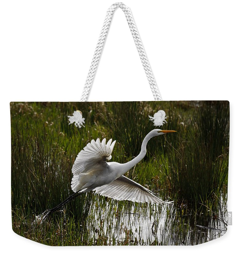 Backlit Eqret Weekender Tote Bag featuring the photograph Backlit Eqret by Wes and Dotty Weber