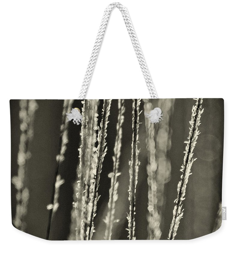 North America Weekender Tote Bag featuring the photograph Backlit Sepia Toned Wild Grasses In Black And White by Dave Welling