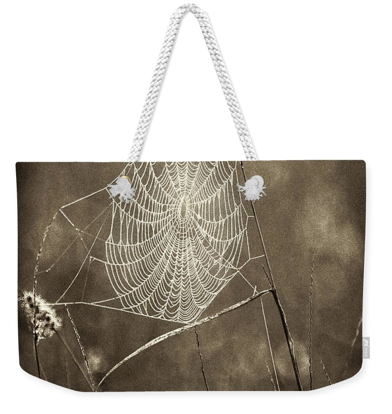 Wildlife Weekender Tote Bag featuring the photograph Backlit Spider Web In Sepia Tones by Dave Welling