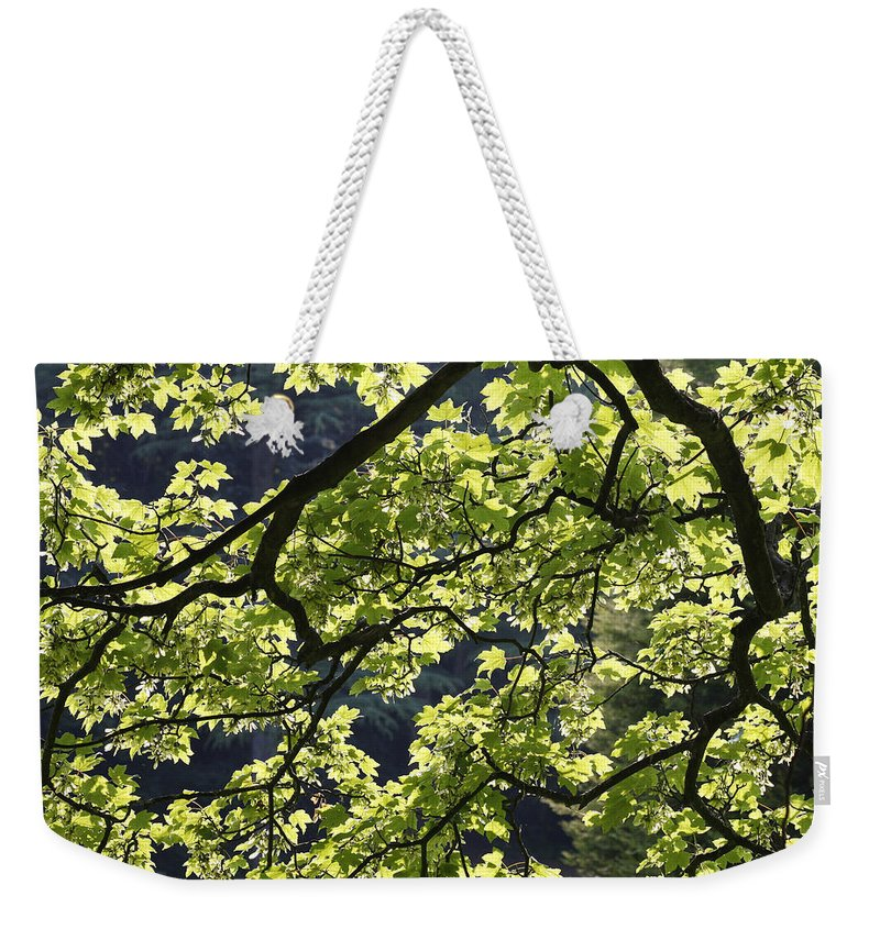Background Weekender Tote Bag featuring the photograph Backlit Tree by Steve Ball