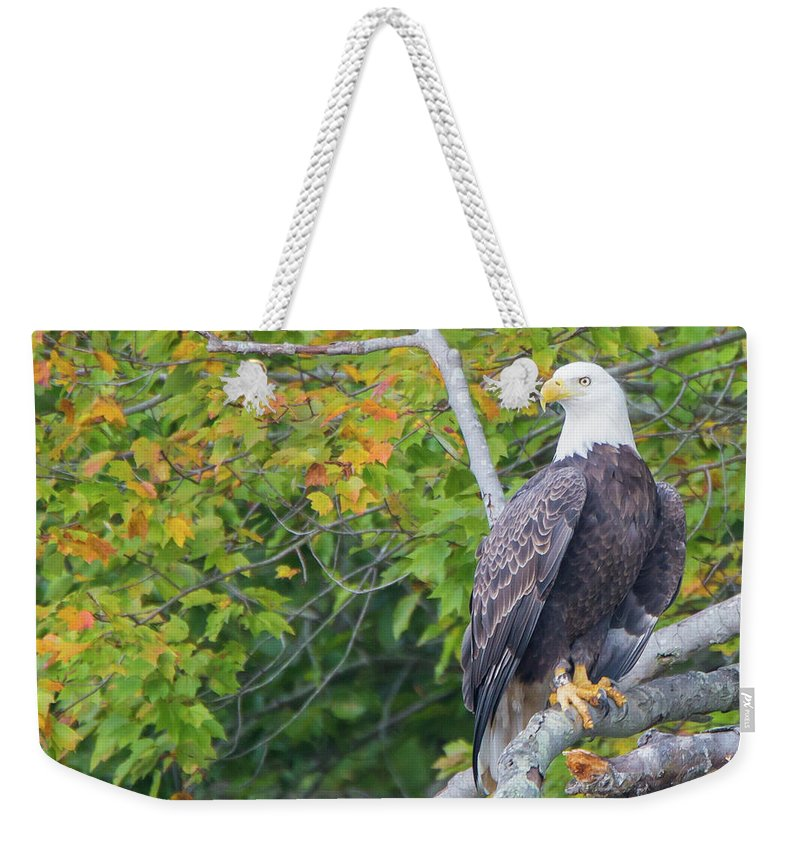 Animals Weekender Tote Bag featuring the photograph Bald Eagle In Fall Colors Animals by Mark Gottlieb