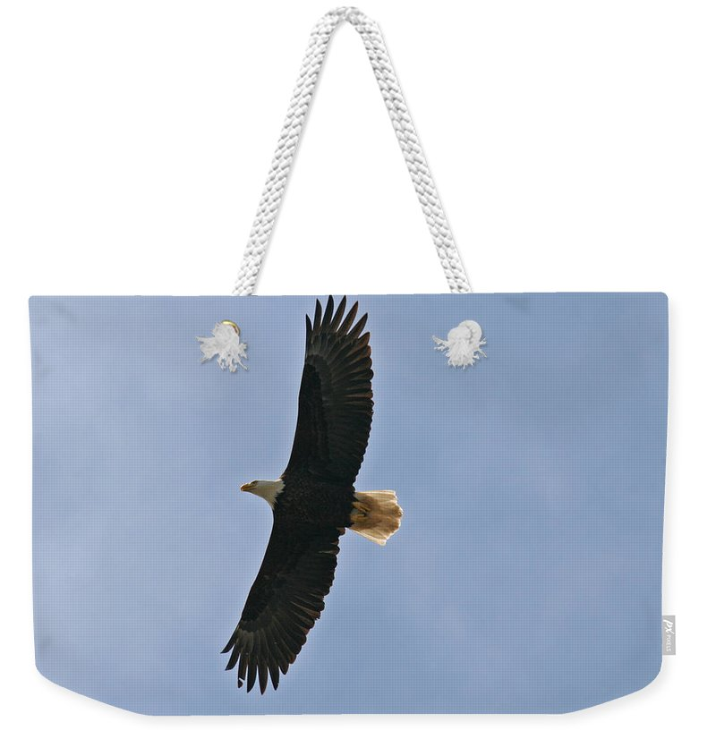 Eagles Weekender Tote Bag featuring the photograph Bald Eagle In Sandspit Bc by Elizabeth Rose