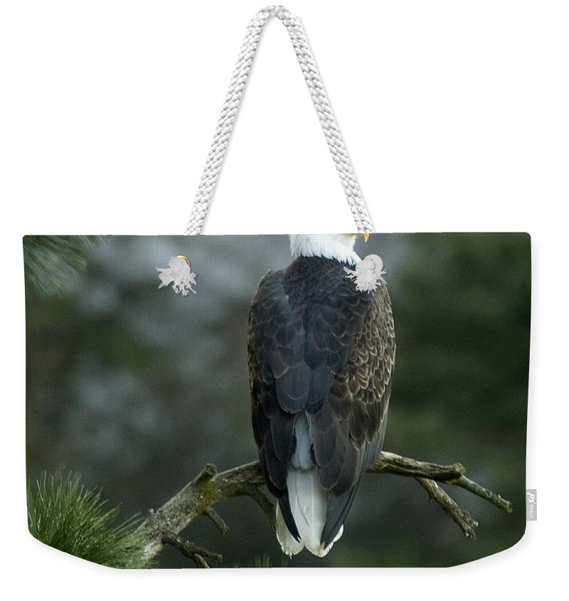 Bald Eagle Weekender Tote Bag featuring the photograph Bald Eagle In Tree by Paul DeRocker