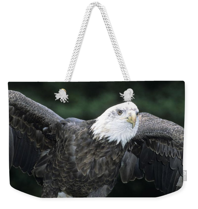 Eagle Weekender Tote Bag featuring the photograph Bald Eagle Landing On Prey by Larry Allan