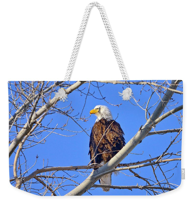 Bald Eagle Weekender Tote Bag featuring the photograph Bald Eagle Perched by Greg Norrell