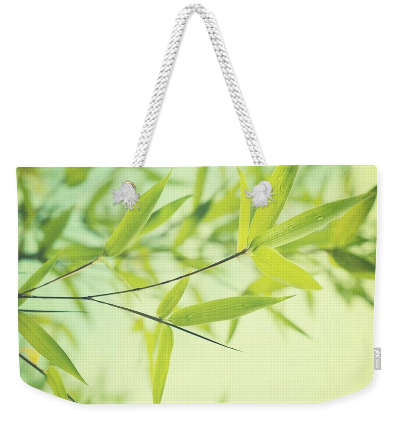 Bamboo Weekender Tote Bag featuring the photograph Bamboo In The Sun by Priska Wettstein