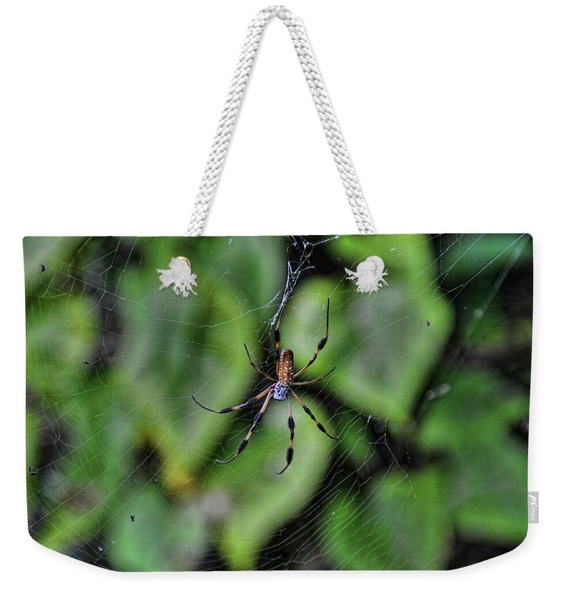 Spider Weekender Tote Bag featuring the photograph Banana Spider by Rich Bodane