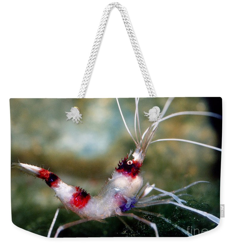 Fauna Weekender Tote Bag featuring the photograph Banded Coral Shrimp by Millard H. Sharp