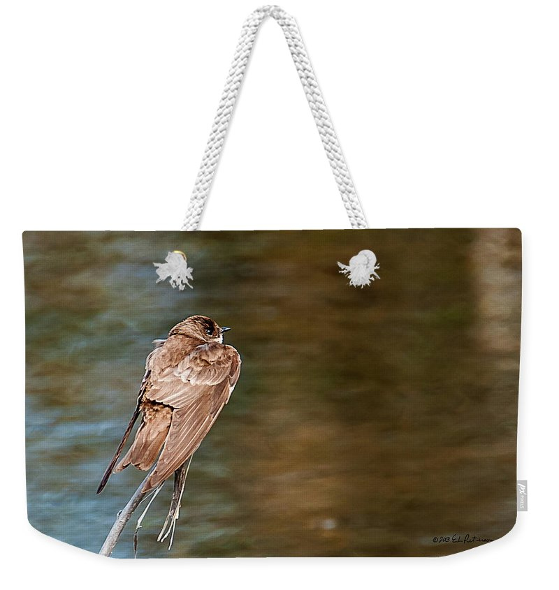 Wildlife Weekender Tote Bag featuring the photograph Bank Swallow Resting by Edward Peterson