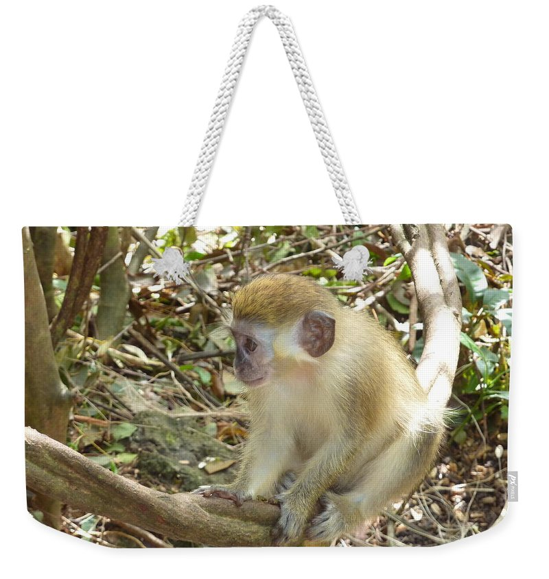 Green Monkey Weekender Tote Bag featuring the photograph Barbados Green Monkey by Diane Palmer