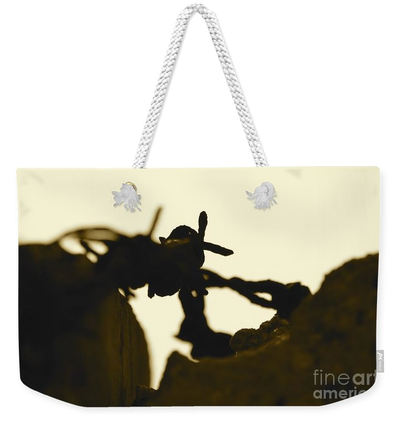 Barbed Wire Weekender Tote Bag featuring the photograph Barbed by Alfie Borg