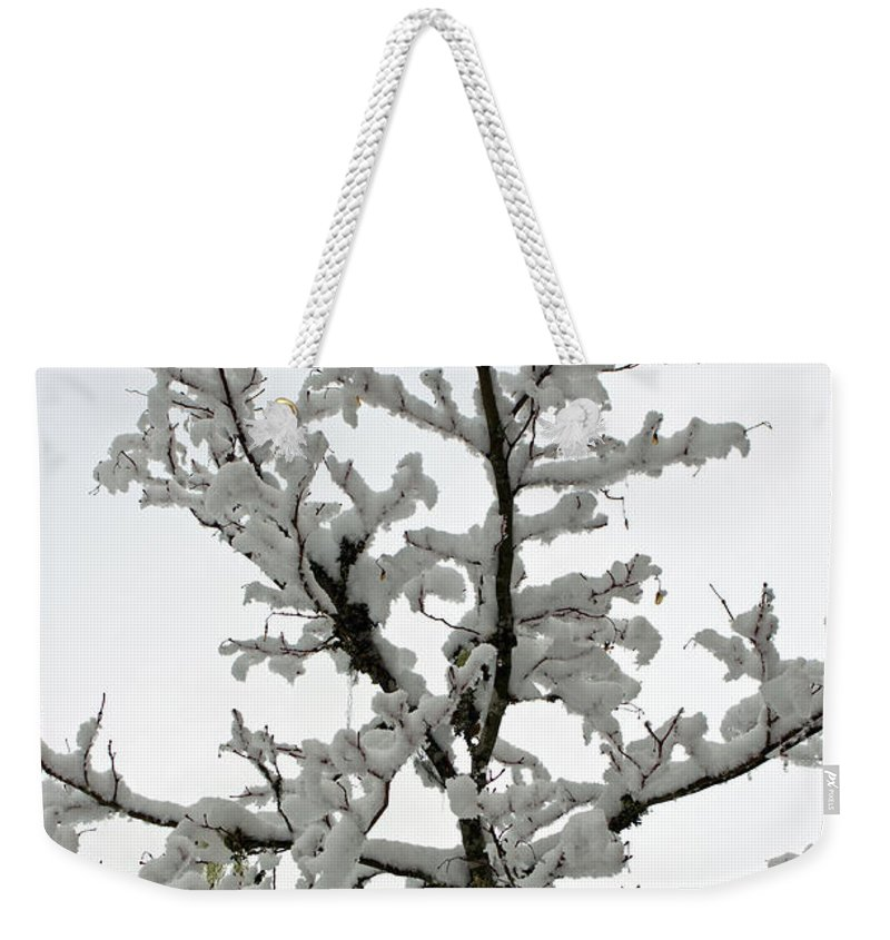 Bare Branches Weekender Tote Bag featuring the photograph Bare Branches With Snow by Tikvah's Hope