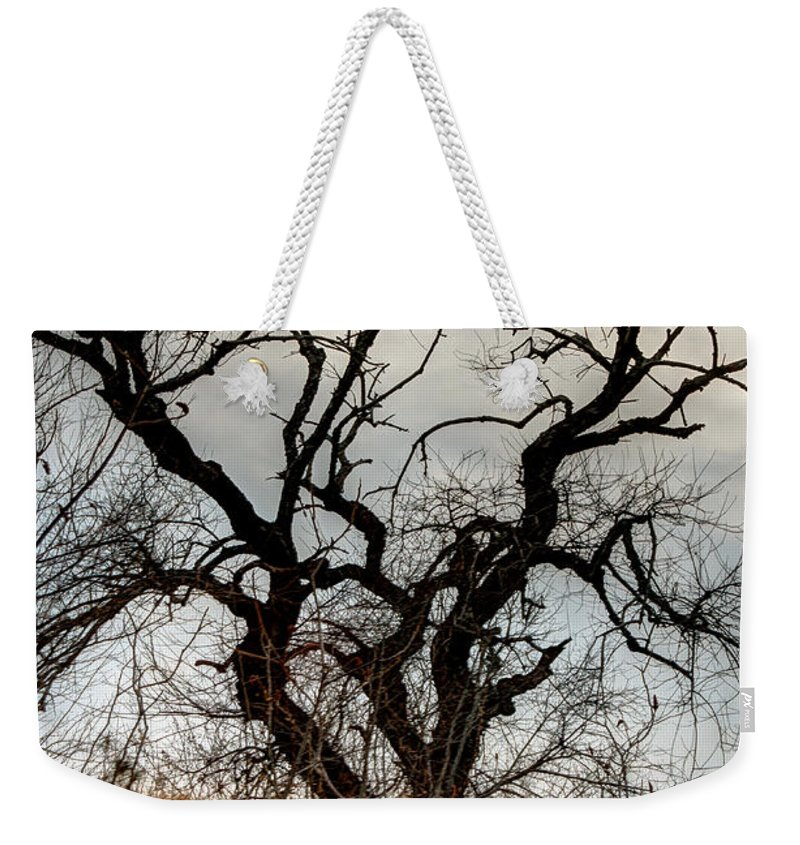 Laura Duhaime Photography Weekender Tote Bag featuring the photograph Bare Tree On The Hill by Laura Duhaime