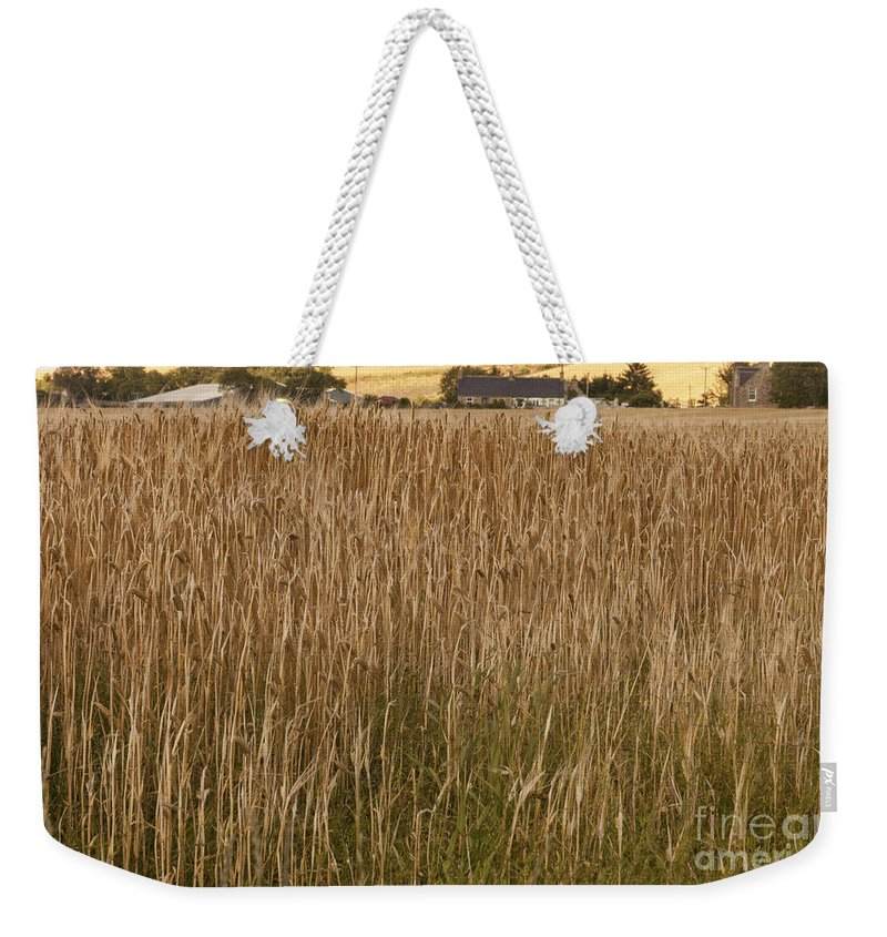 Agriculture Weekender Tote Bag featuring the photograph Barley Field by Diane Macdonald