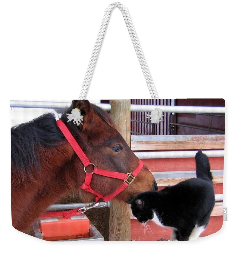 Horse Weekender Tote Bag featuring the photograph Barn Buddies by Will Borden