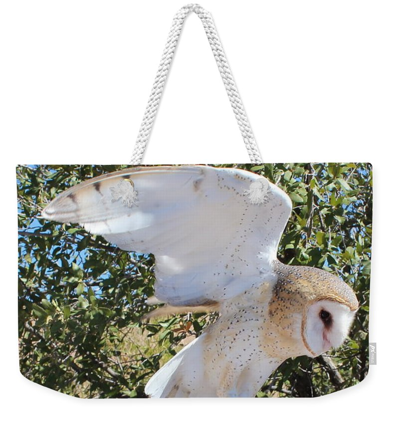 Barn Owl Weekender Tote Bag featuring the photograph Barn Owl 2 by Kume Bryant