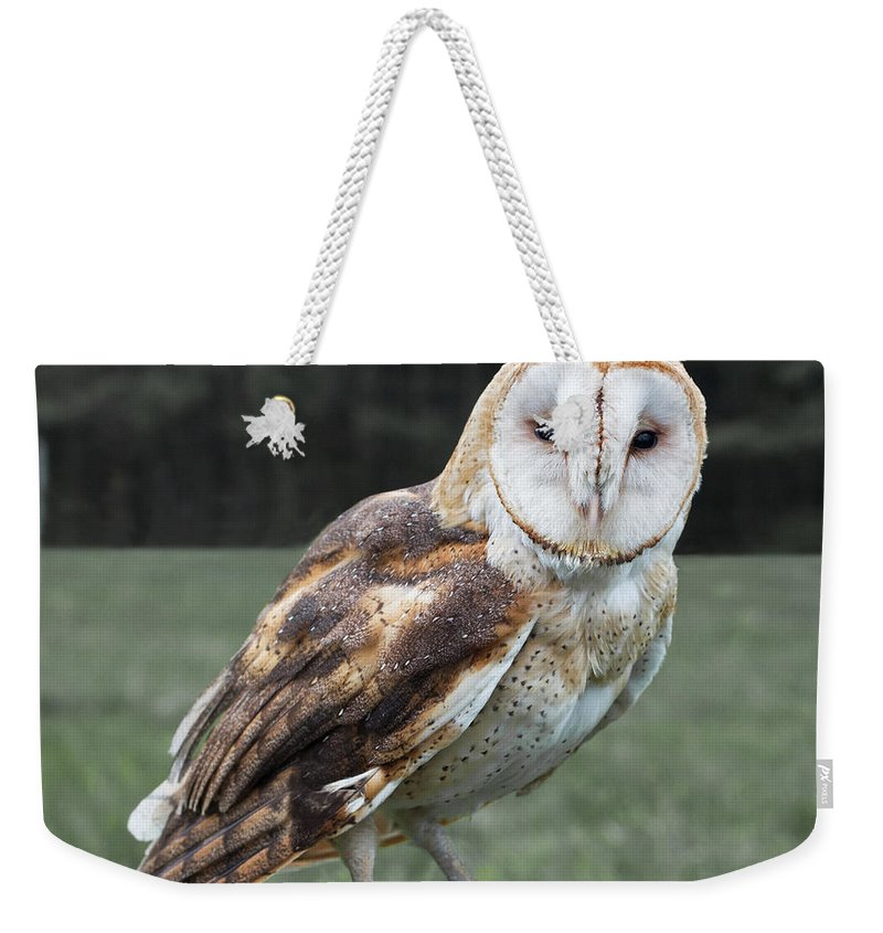 Barn Weekender Tote Bag featuring the photograph Barn Owl by Barbara McMahon
