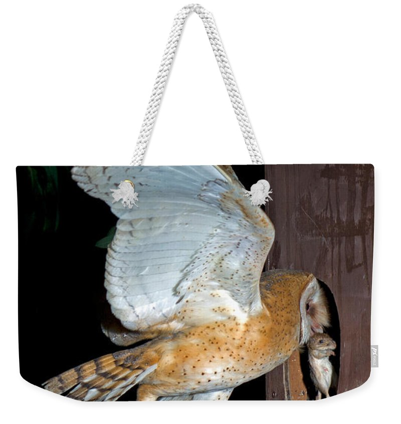 Barn Owl Weekender Tote Bag featuring the photograph Barn Owl With Rat by Anthony Mercieca