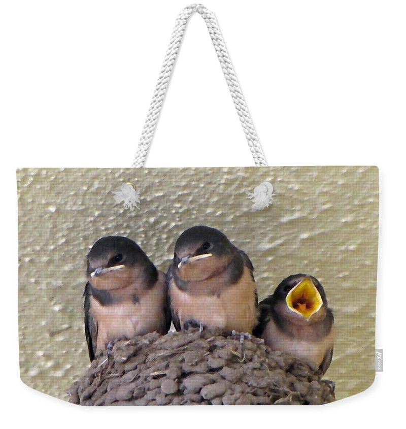 Nest Weekender Tote Bag featuring the photograph Barn Swallows 2 by Tikvah's Hope