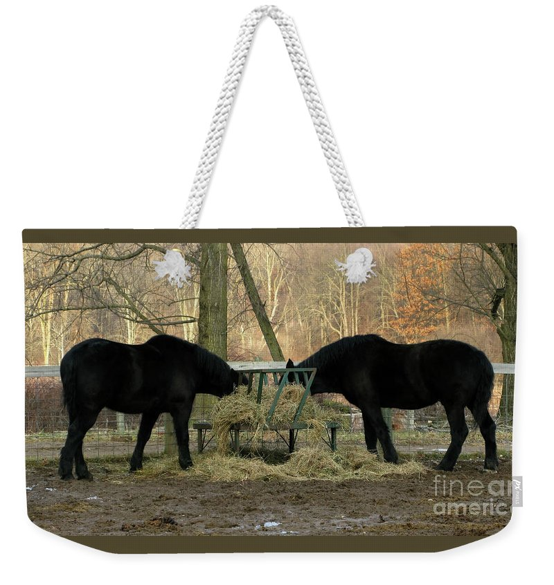 Horse Weekender Tote Bag featuring the photograph Barnyard Beauties by Ann Horn