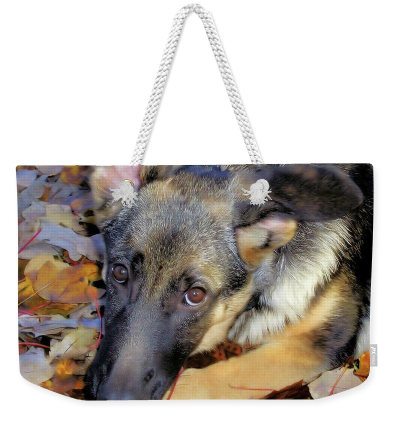 Autumn Weekender Tote Bag featuring the photograph Baron In The Leaves by Karol Livote