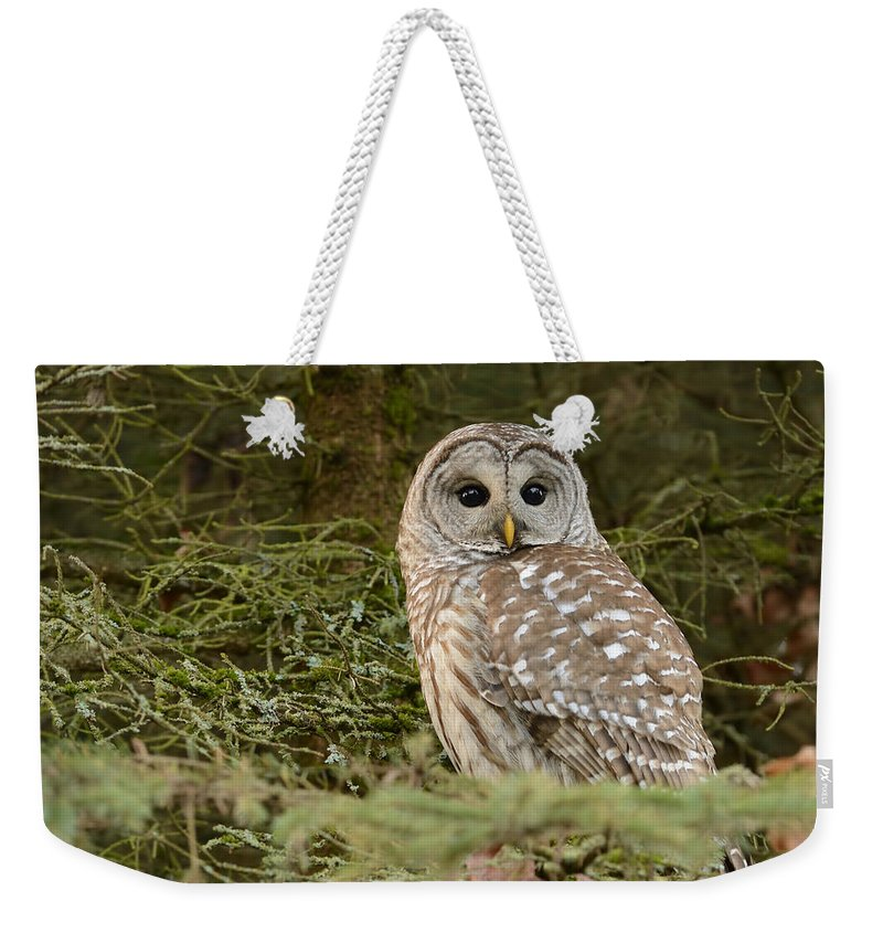 Alert Weekender Tote Bag featuring the photograph Barred Owl by Marv Vandehey