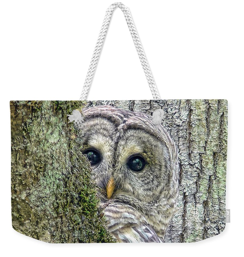 Owl Weekender Tote Bag featuring the photograph Barred Owl Peek A Boo by Jennie Marie Schell