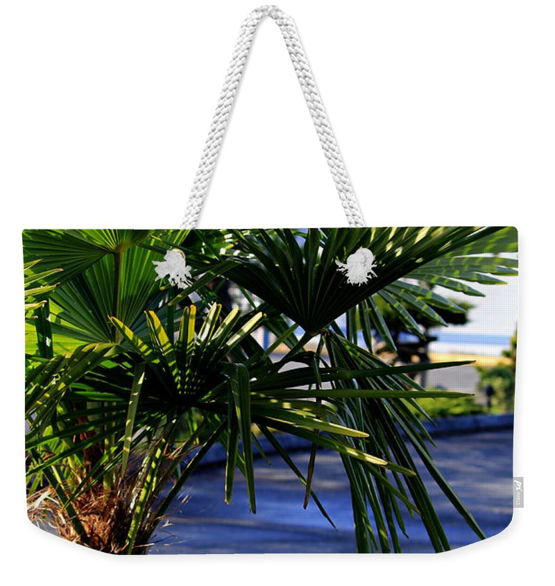 Palm Weekender Tote Bag featuring the photograph Basking In The Sun by Jeanette C Landstrom