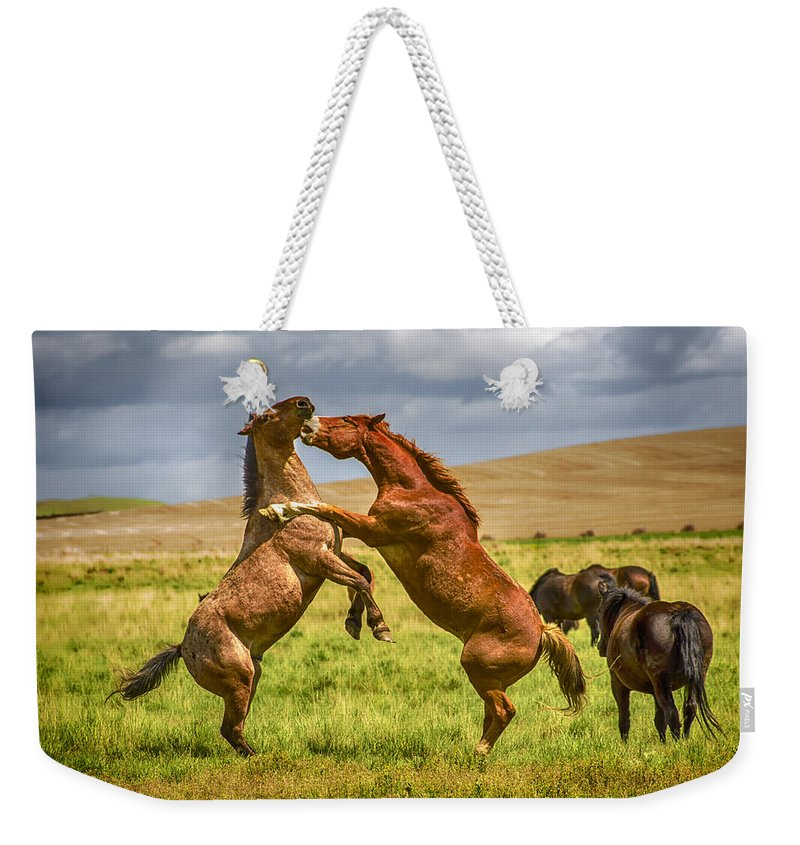 Agriculture Weekender Tote Bag featuring the photograph Battling Stallions by John Trax