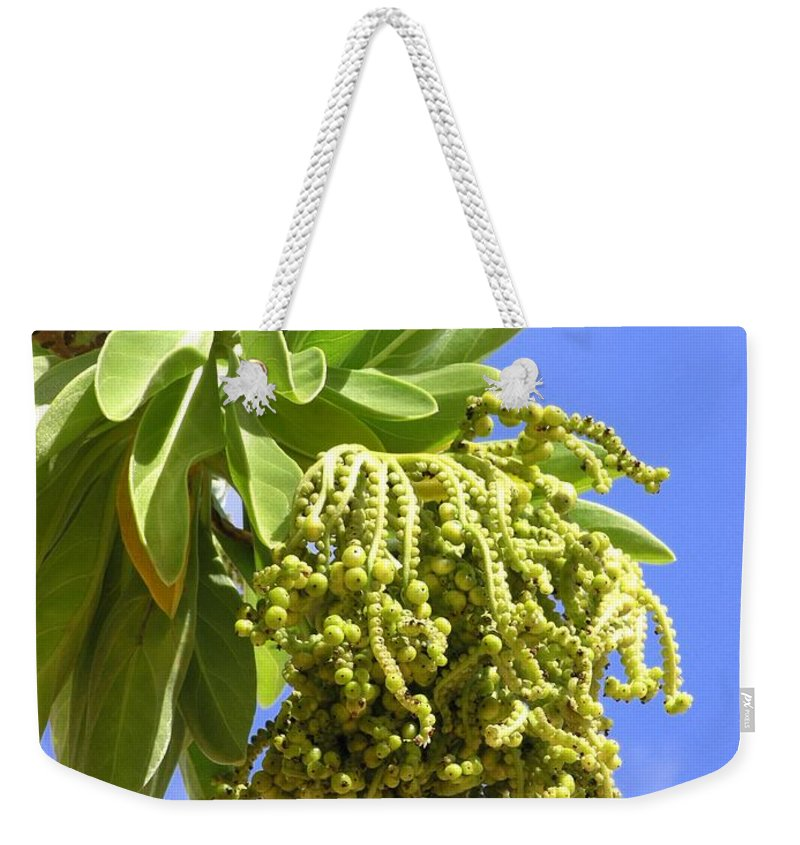 Beach Weekender Tote Bag featuring the photograph Beach Tree Seed Pods by Mary Deal