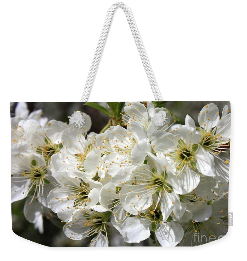 Apple Blossoms Weekender Tote Bag featuring the photograph Beautiful Apple Blossoms by Carol Groenen