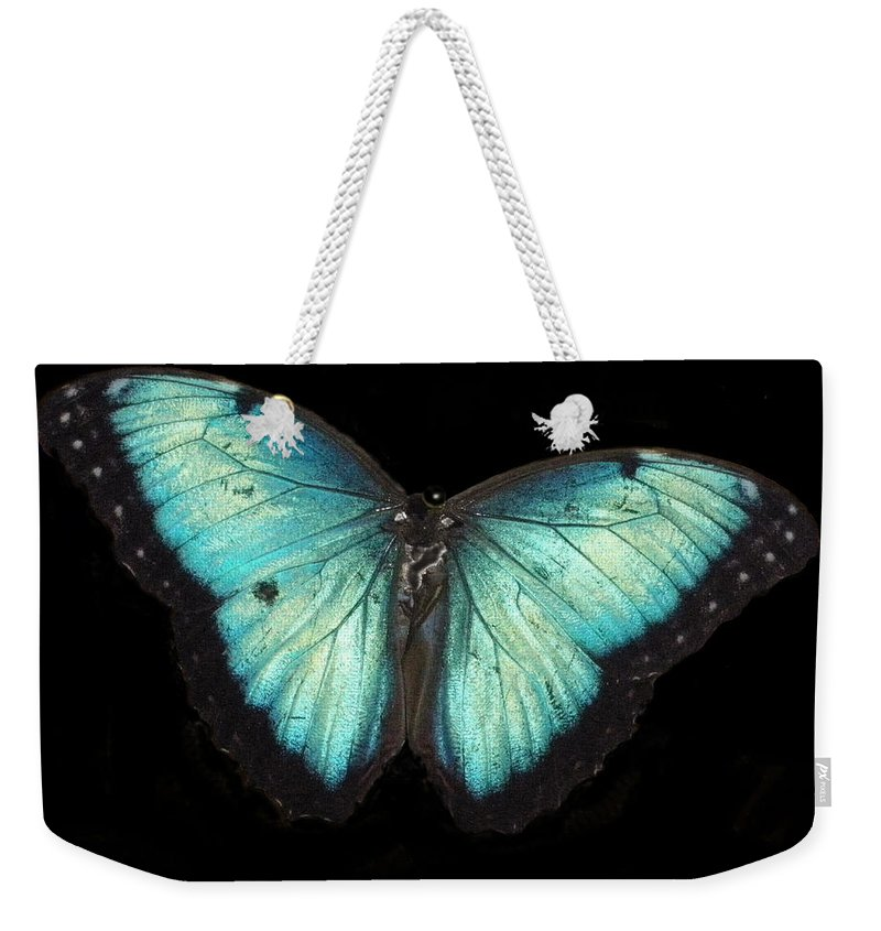 Animal Weekender Tote Bag featuring the photograph Beautiful Butterfly by Glenn Aker